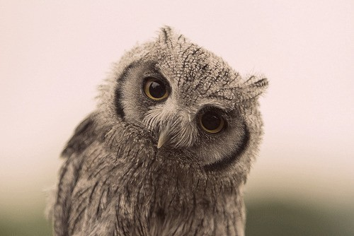 Wise owl pictures - photo#10